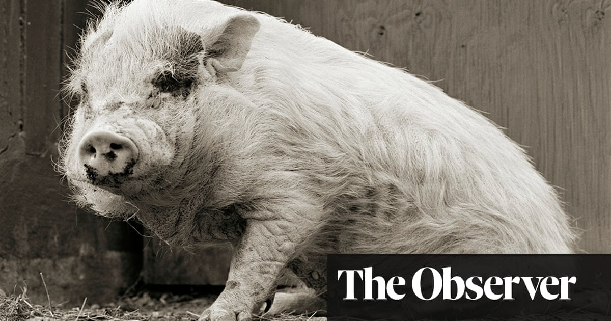 Put out to grass: when animals are allowed to grow old | Art