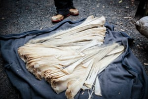 The baleen recovered from a stranded Pygmy Right Whale.