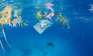 A green sea turtle swims away from thrash and plastic.