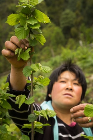 Ngawang Choden, a farmer in the eastern Mongar province of Bhutan Mountain Hazelnuts. Bhutan