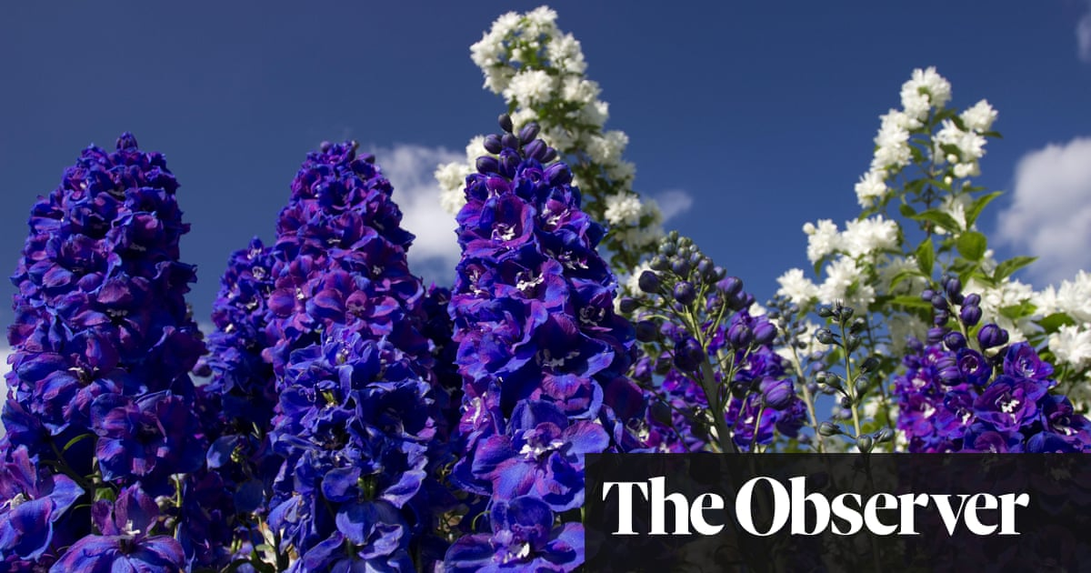 All is not rosy for UK gardens as Brexit hits supplies and Covid hikes demand