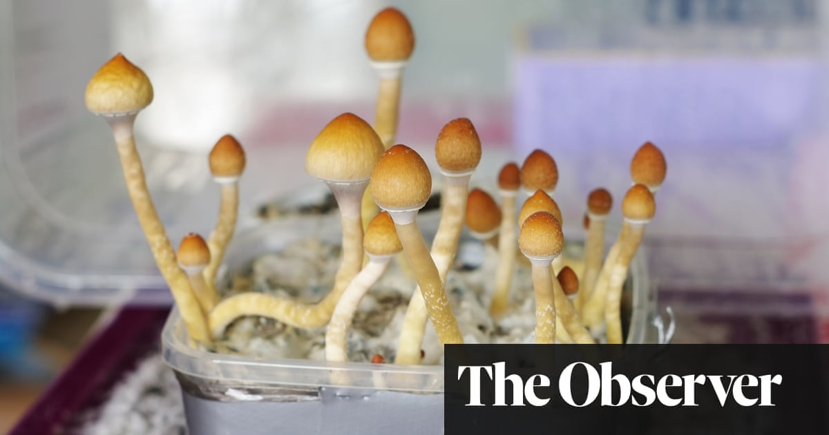 Magic mushrooms could help ex-soldiers to overcome trauma - the guardian