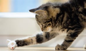 The charity Snarl is urging people not to let their cats out at night, when most of the killings have taken place.