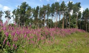 Leechpool Woods near Horsham