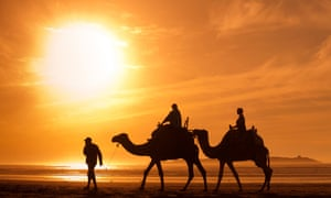 tourism in Africa, people tourists riding camels on the beachsilhouettes of camels at sunset