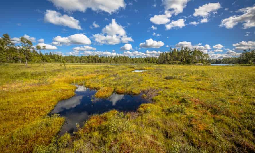A peat bog in Glaskogen nature reserve, Sweden.