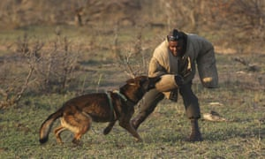 Dog handler, Wisdom Makhubele is attacked by a dog during a simulated tracking exercise on the edge of Kruger national park