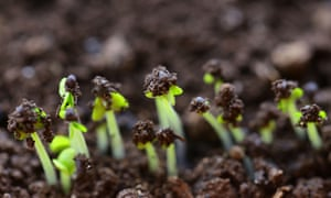 Green shoots sprouting from the ground