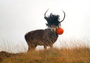 This stag is hoping to attract a suitable mate with its impressive plastic horn adornment.
