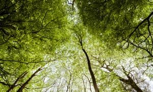 "The new ""green taxonomy"" law would enable the EU to set science-based criteria for what kind of investments can be marketed as ""environmentally sustainable""."