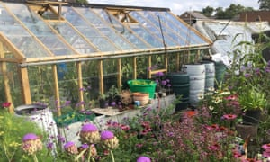 greenhouse from allotment callout 2019