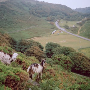 Don't talk about the goat wars': how a feral herd divided a Devon