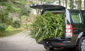 Large Christmas tree in open boot of car