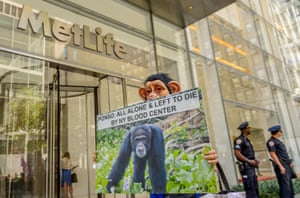 Animal activists protest outside MetLife Plaza in New York