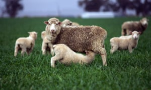 An EU source said WTO members such as New Zealand had a case because the joint UK-EU proposals could make trade arrangements on lamb, for example, more rigid.