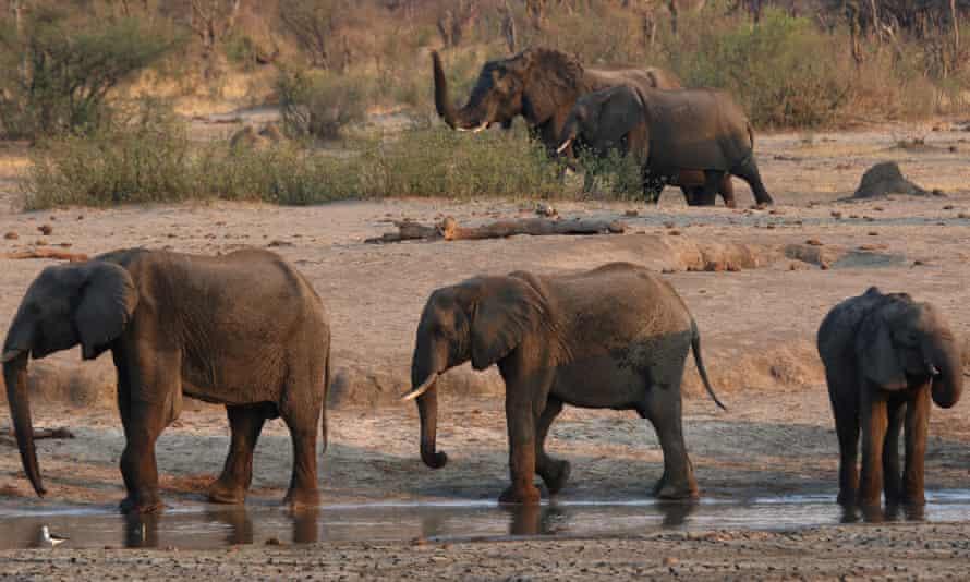 Elephants near a watering hole