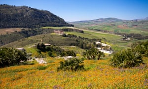 Blooming Flowers in the sicilian landscape, Ancient site of Segesta