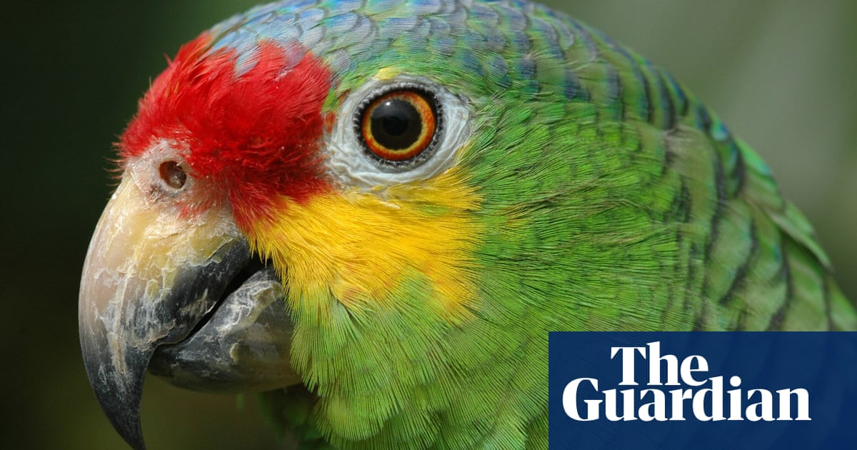 Police seize 'super obedient' lookout parrot trained by Brazilian