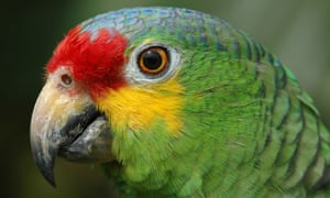 The parrot has been handed over to a local zoo.