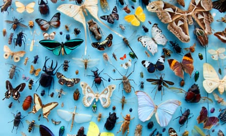 Collection of insects, moths, butterflies, beetles from around the world, the University Museum of Natural History, Oxford