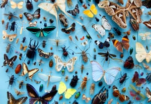 A collection of moths, butterflies at the University Museum of Natural History, Oxford