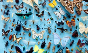 Collection of insects, moths, butterflies, beetles from around the world, the University Museum of Natural History, Oxford, UK.