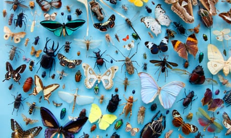 A giant insect ecosystem is collapsing due to humans. It's a catastrophe