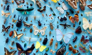 Collection of insects, moths, butterflies, beetles from around the world, the University Museum of Natural History, Oxford<br>Collection of insects, moths, butterflies, beetles from around the world, the University Museum of Natural History, Oxford