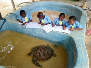 Marine Scouts learn how to be sea turtle vets of the future
