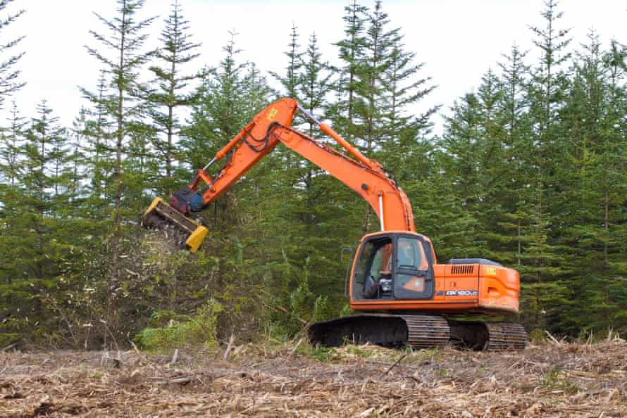 Land managers use heavy equipment to remove spruce and pine trees from the Forsinard Flows Reserve in an effort to restore the bog ecosystem