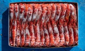A one kilo case of red prawns.
