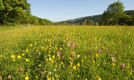 A wildflower meadow near Buckden in the Yorkshire Dales National Park.