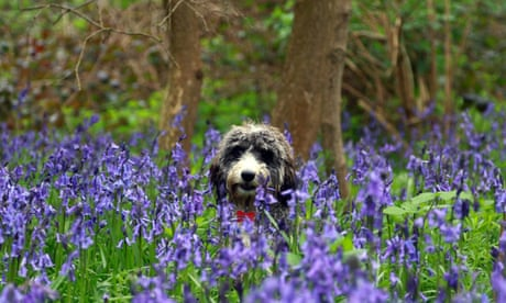 Finally, the joys of spring: from wildlife to blockbusters, ideas to inspire