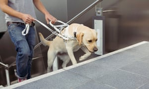Man walking up stairs with assistance of guide dog<br>GettyImages-523282534