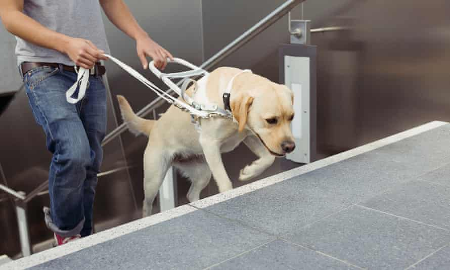 A man walking up stairs with the assistance of a guide dog.