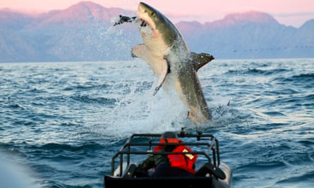 Still from Discovery programme about sharks