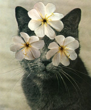 A collage of a cat with flowers on its eyes by Stephen Eichhorn