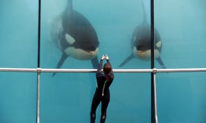 An employee trains orcas at Marineland on the C​​ôte d'Azur