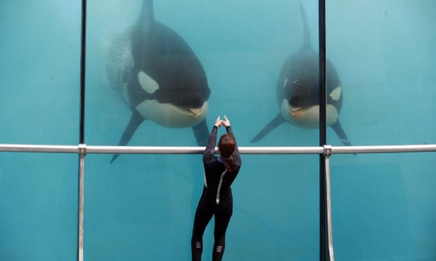 POLL: Should orcas and dolphins be kept in captivity?