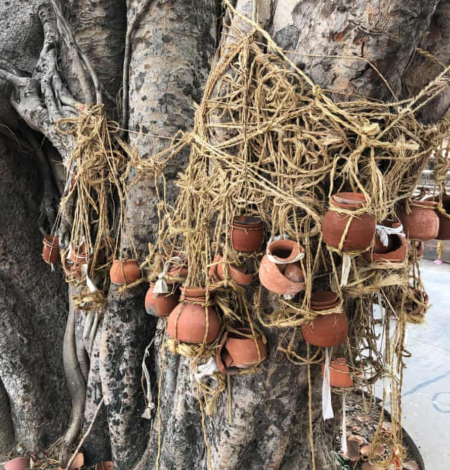 Pots hang from the trunk of a banyan tree by the Ganges in Gahmar to represent the recently dead