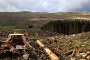Felled woodland in the North Yorkshire Dales national park.