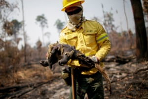 Cleio Junior, a fire brigade member of Brazilian Institute for the Environment and Renewable Natural Resources (IBAMA) holds a dead anteater while attempting to control hot points in a tract of the Amazon jungle near Apui, Amazonas State