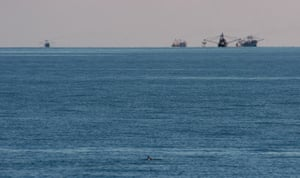 A vaquita porpoise in the Gulf of California, US