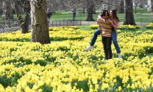 """A couple amongst daffodils in St James's Park, London, with forecasters predicting """"the first signs of spring"""" will be felt across much of the UK in the coming days."""