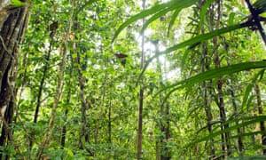 Tropical rainforest in Yasunî National Park, Ecuador.