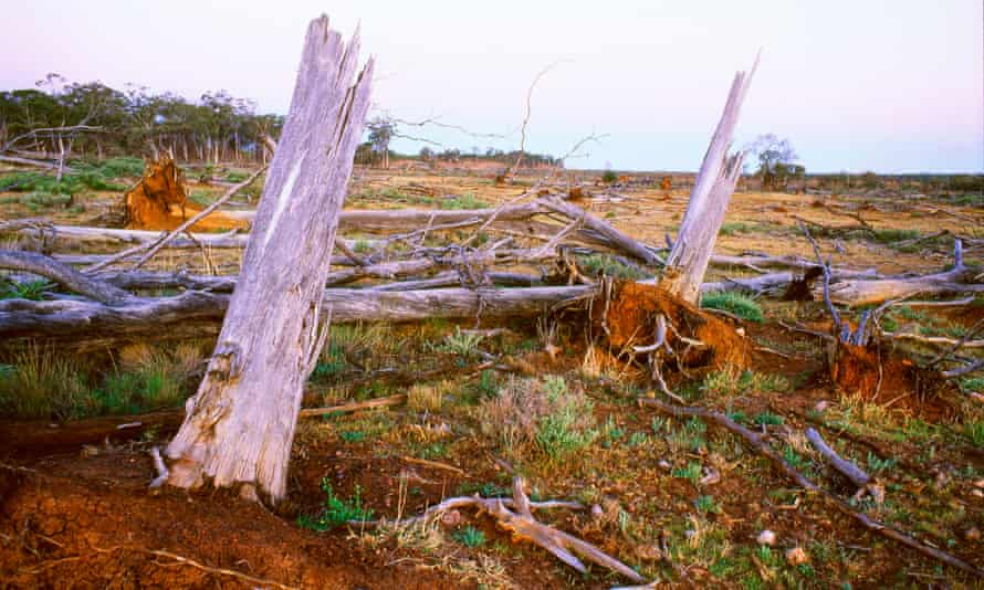 The NSW government commissioned a highly secret review when land clearing exceeded 20,000 hectares in less than a year