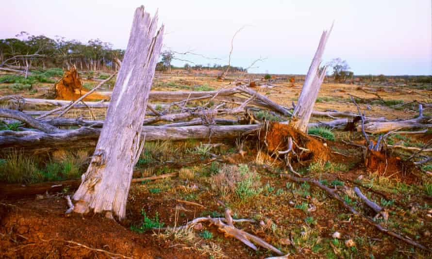 Deforestation of native vegetation by land clearing in central Queensland