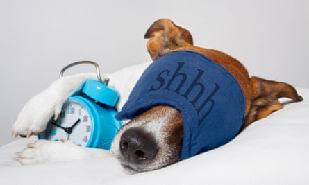 dog sleeping with eye mask alarm clock