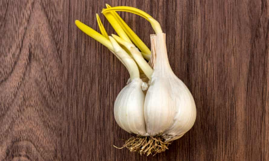 Indoor ingredients: leftover garlic bulbs.