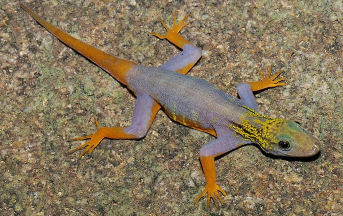 Lizard traffickers exploit legal loopholes to trade at